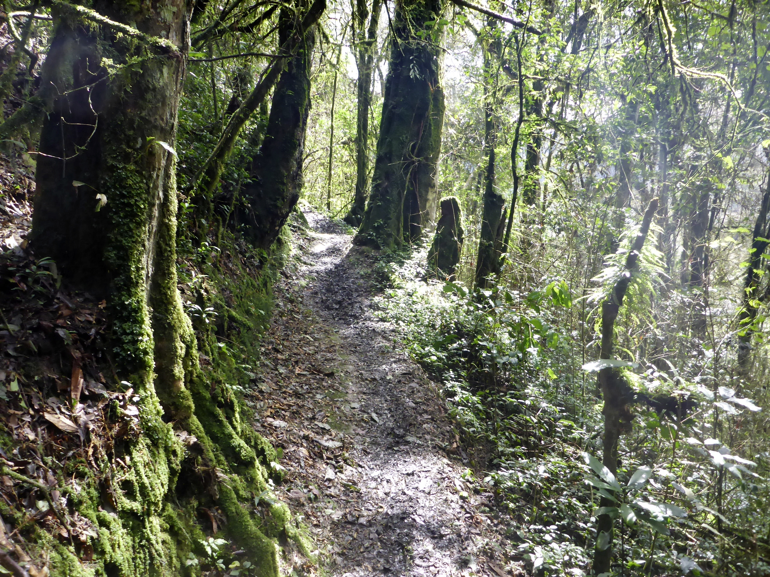 Nyungwe Weg zum Canopy