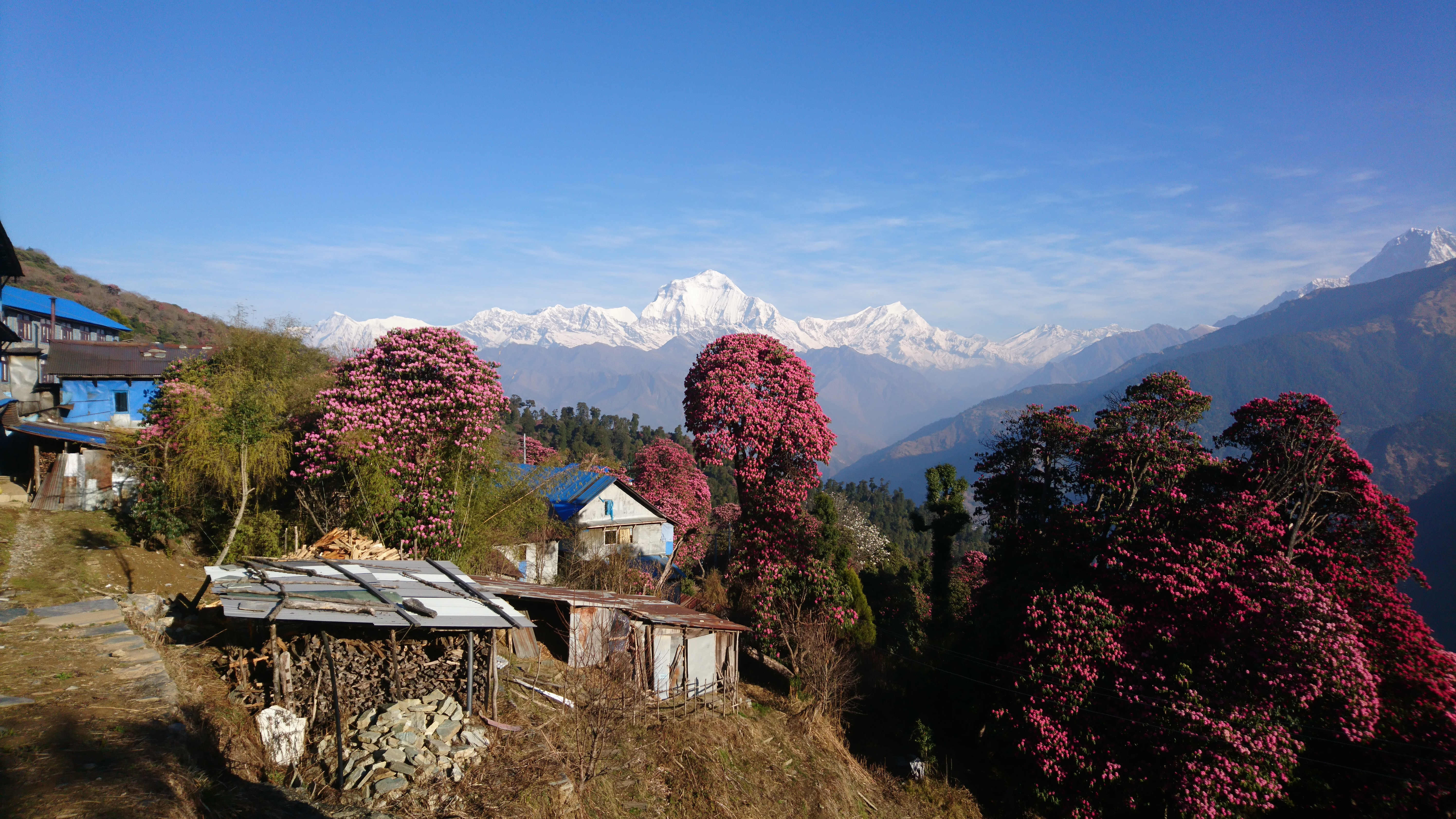 Blick vom Dorf Ghorepani auf die Dhaulagiri-Kette