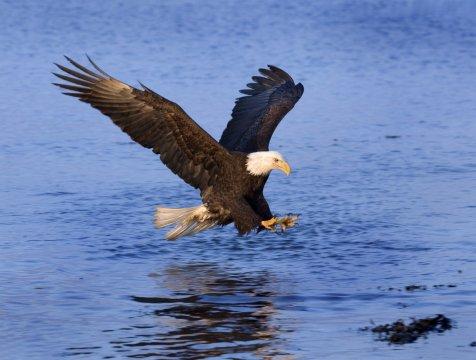 Kanada Adler Beute_2