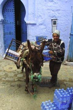Wasserlieferant mit Esel in Chefchaouen