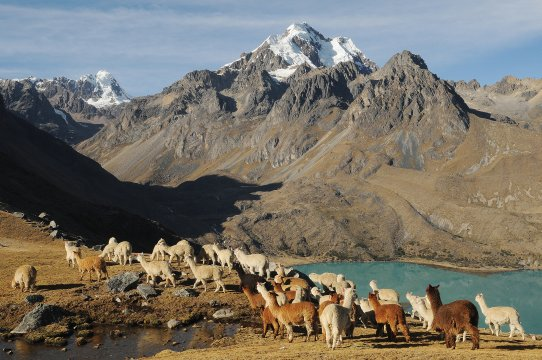 Anden Peru Trekking