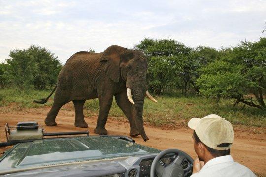 Elefant im Blick_2