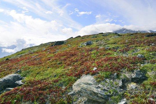 Wanderung Thompson Pass Tundra_2