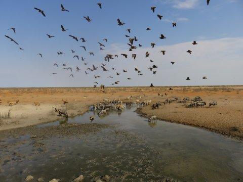 Wasserloch im Etosha-Nationalpark
