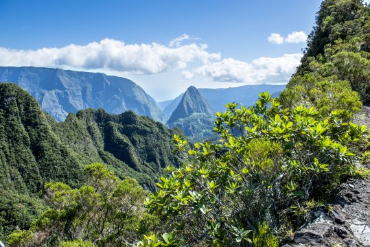 Wanderweg mit Vegetation Mafate