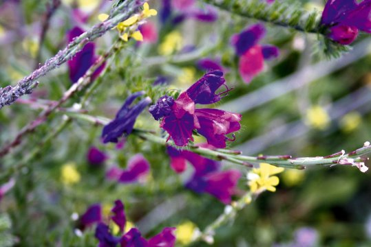 Blüten von Gran Canaria