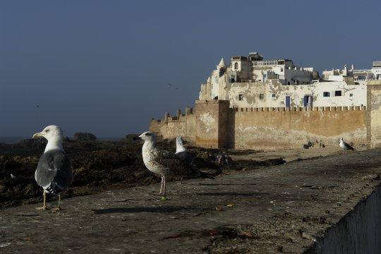 Essaouira - Altstadt am Atlantik