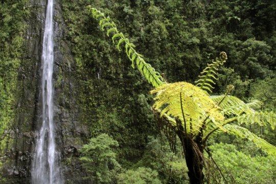 Wasserfall - La Réunion
