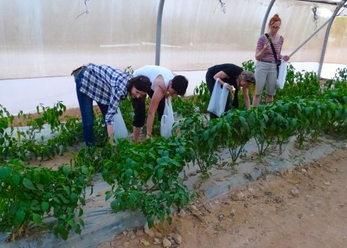 Israel-E-Kibbuz-Elifaz-Pflanzen