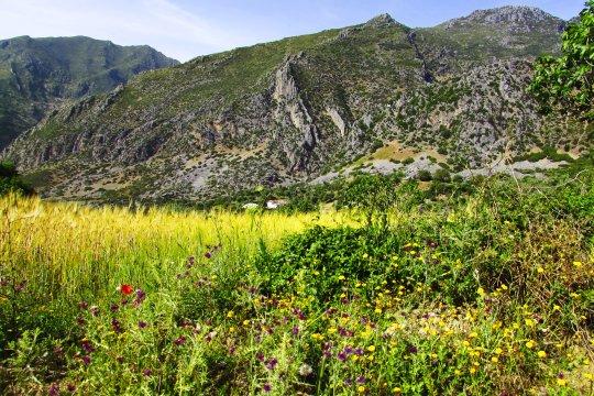 Rif Gebirge Chefchaouen Blumen