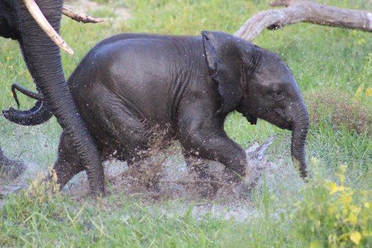 Botswana-Elefantenbaby-Makgadikgadi
