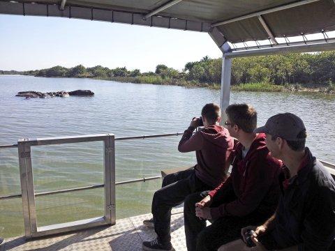 St Lucia Hippos beobachten_2