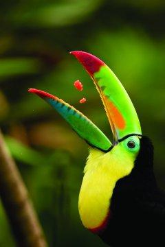Costa Rica - Monteverde-Tucan