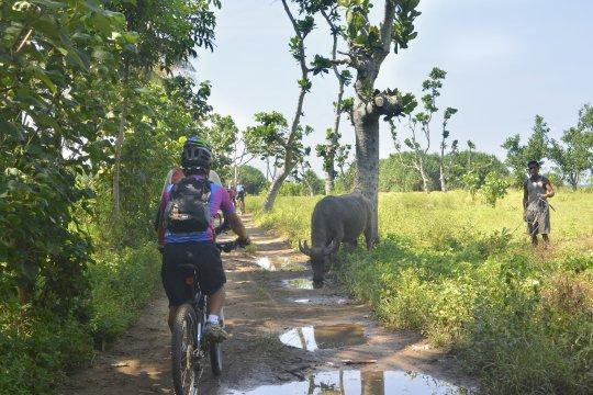 MTB Bali Per Bike nach Pulau Merah