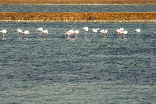 Flamingo's in der Wüste Negev_2