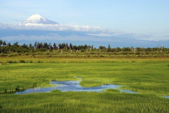 grüne Landschaft rund um den Tolbatschik
