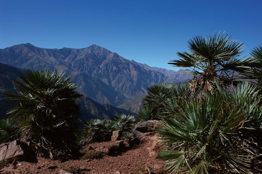 Trekking Toubkal Bergpalme
