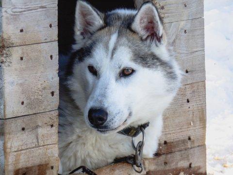 Hundehütte Huskycamp Saija Lodge