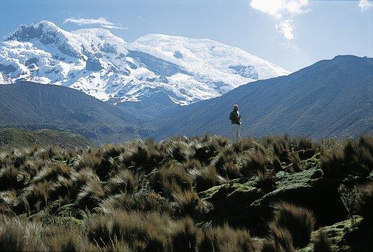 Chimborazo vom Abraspungo-Tal gesehen