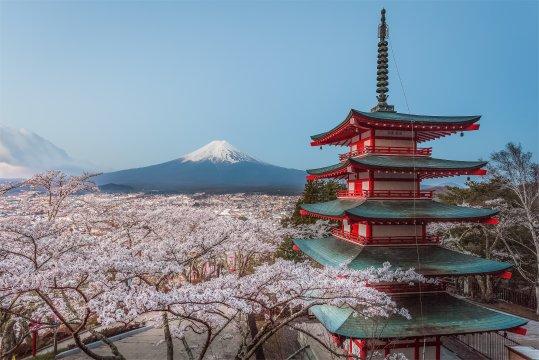 Fuji und Pagode während der Kirschblüte
