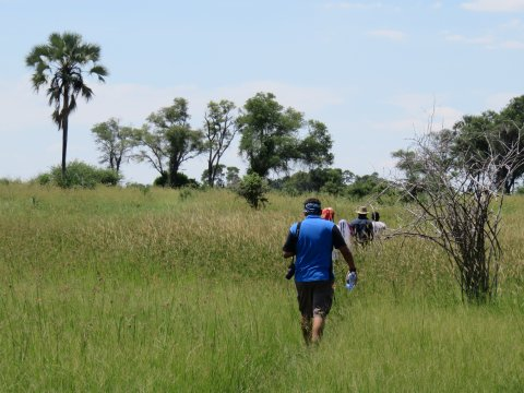 Botswana-Okavango-Walking-Safari
