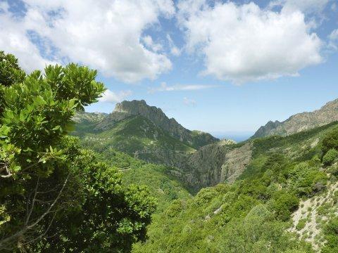 Bergwald Korsika