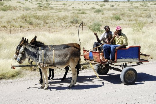 Eselkutsche Namibia