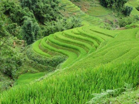 Vietnam-Region-Sapa-grünes-Leuchten