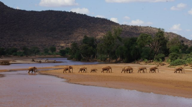 Kenia_Samburu NR_Elefant River Crossing