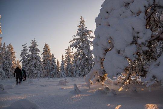 Schneeschuhwandern im Winter Wunderland