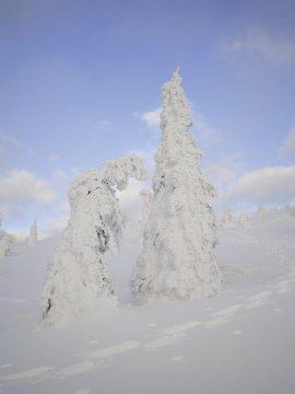 Schneeschuhgehen Baerischer Wald Eisbaeume 4