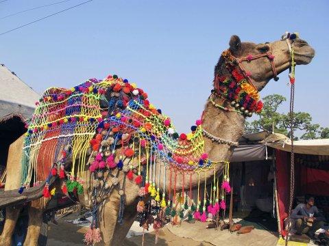 Pushkar Fest