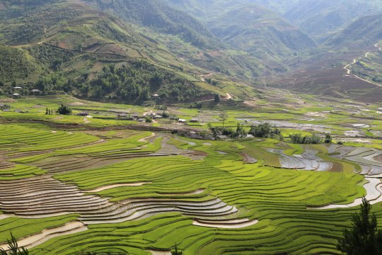 Reisanbau bei Mu Cang Chai