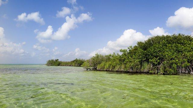 Mexiko Quintana Roo Muyil