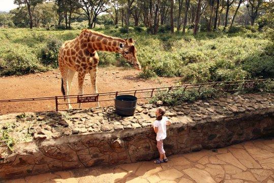 Giraffe Center doch ganz schoen Gross_2