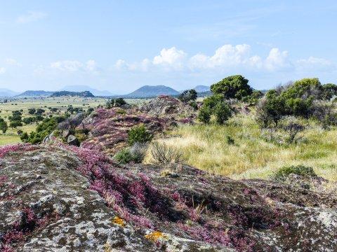 Natur um Sant Andrea Priu
