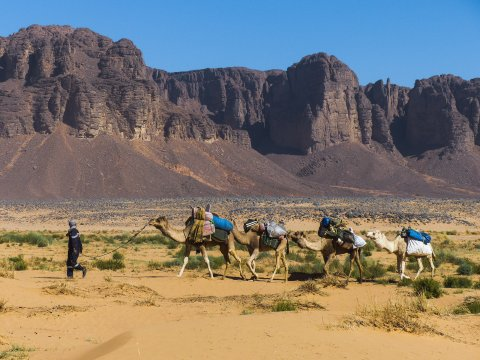 Als Kamelkarawane durchs Bergland der Sahara