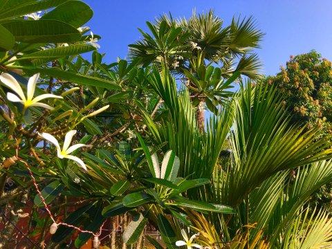 Blüten von Kerala