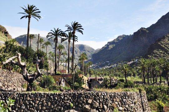 Palmen und Terrassenfelder beim Valle Gran Rey