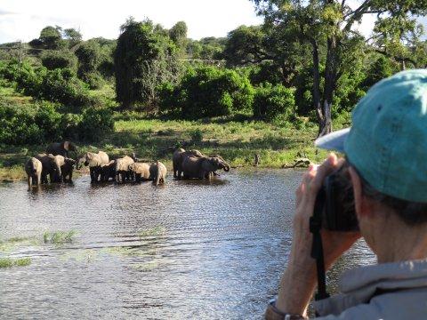 Botswana-Elefanten-am-Chobe-River