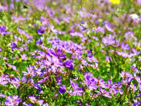 Frühlingsblumen_2