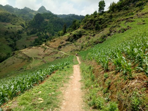 Weg durch Plantagen in Bac Ha