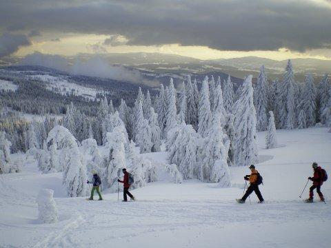 Schneeschuhgehen Bayerischer Wald 7