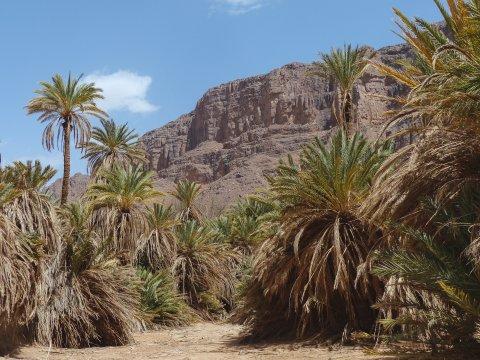 Palmengarten im Oasengürtel von Aharhar