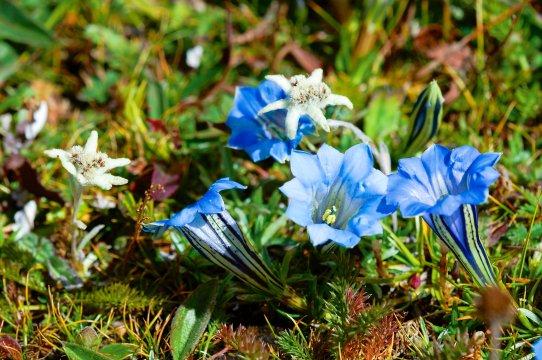Blumenzauber in Bhutan