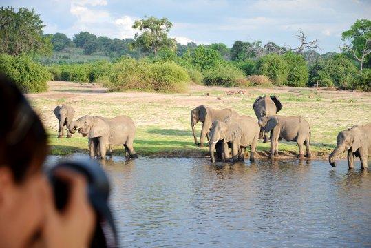 Elefanten am Ufer_2