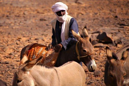 Eseltrekking auf dem Tigalayen  Plateau