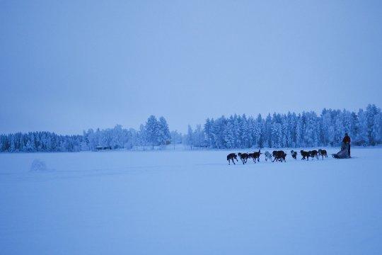 Hundeschlittenfahrt durch die akrtische Winterlandschaft Schwedens©Johanna Frielingsdorf