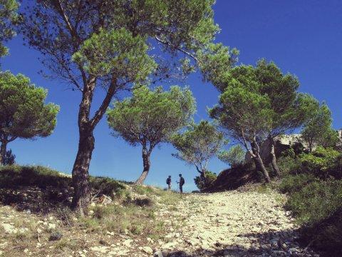 Typischer Wanderweg_2