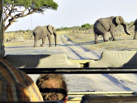 Elefanten kreuzen den Weg